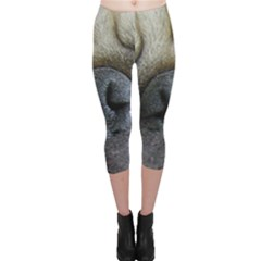 Pug Fawn Eyes Capri Leggings