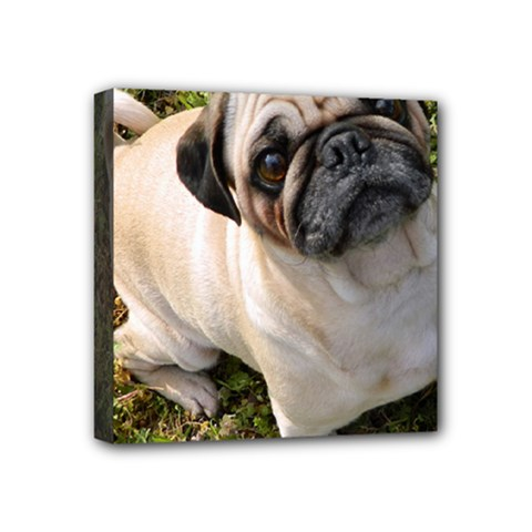 Pug Fawn Full Mini Canvas 4  x 4