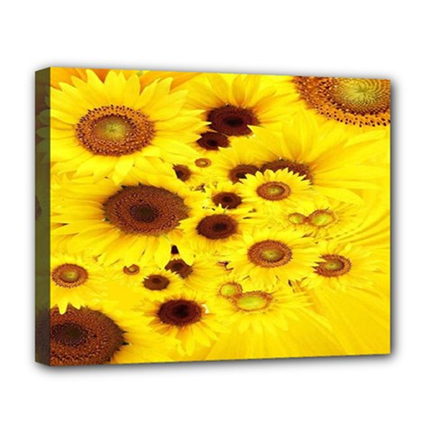 Beautiful Sunflowers Deluxe Canvas 20  x 16
