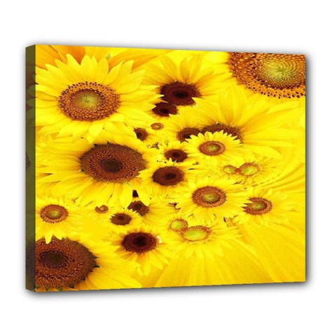 Beautiful Sunflowers Deluxe Canvas 24  X 20