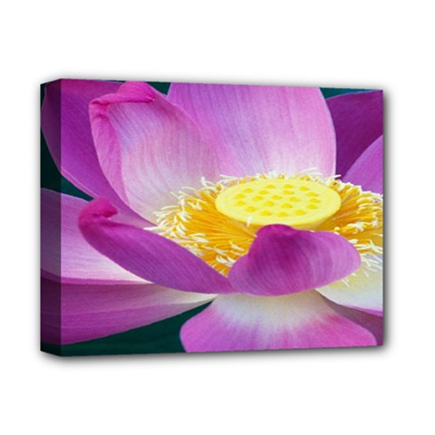 Pink Lotus Flower Deluxe Canvas 14  X 11