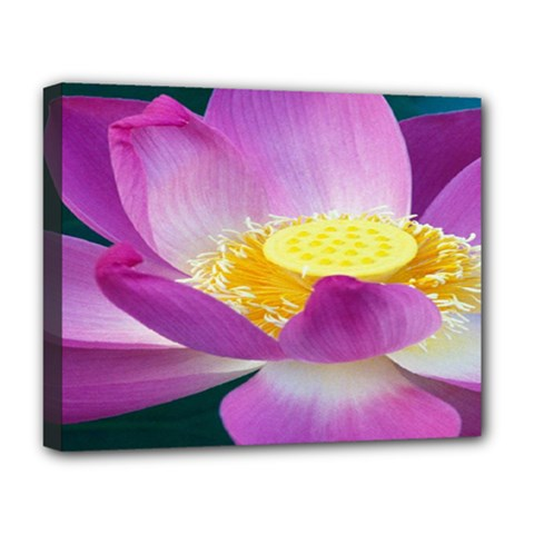 Pink Lotus Flower Deluxe Canvas 20  X 16