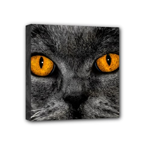 Cat Eyes Background Image Hypnosis Mini Canvas 4  X 4
