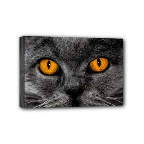 Cat Eyes Background Image Hypnosis Mini Canvas 6  x 4