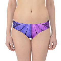 Beautiful Lilac Fractal Feathers of the Starling Hipster Bikini Bottoms