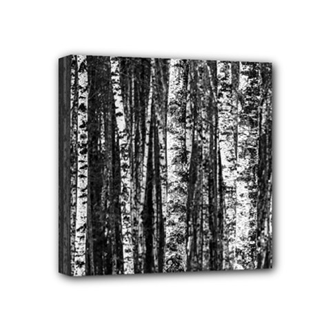 Birch Forest Trees Wood Natural Mini Canvas 4  x 4