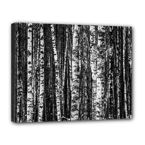 Birch Forest Trees Wood Natural Canvas 14  X 11