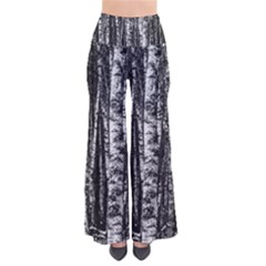 Birch Forest Trees Wood Natural Pants