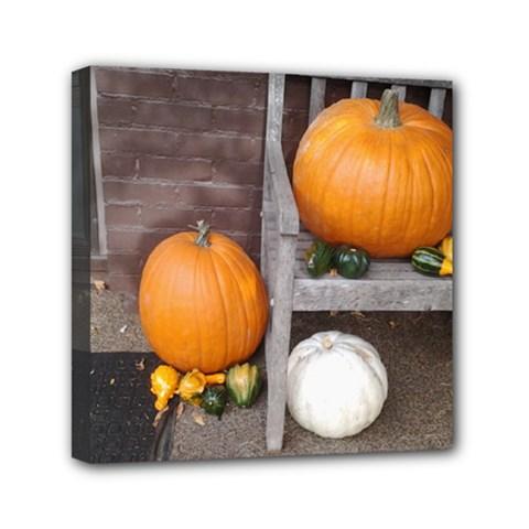 Pumpkins And Gourds Mini Canvas 6  X 6