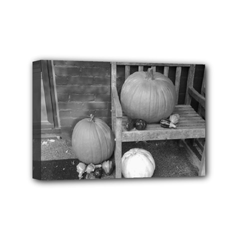 Pumpkind And Gourds Bw Mini Canvas 6  x 4