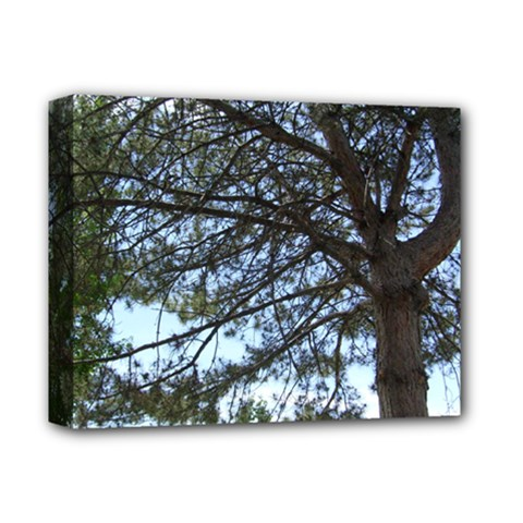 Pine Tree Reaching Deluxe Canvas 14  x 11