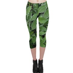 Texture Leaves Light Sun Green Capri Leggings