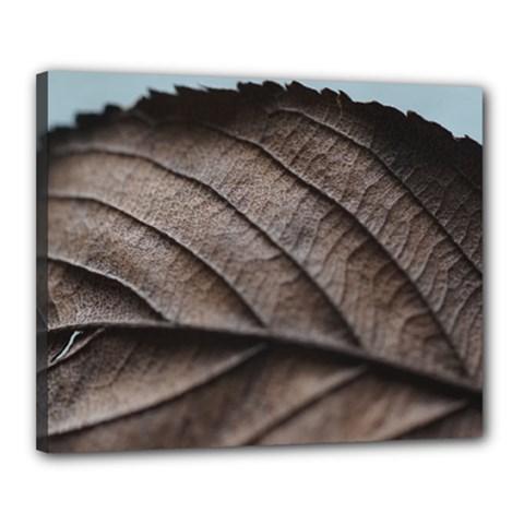 Leaf Veins Nerves Macro Closeup Canvas 20  X 16