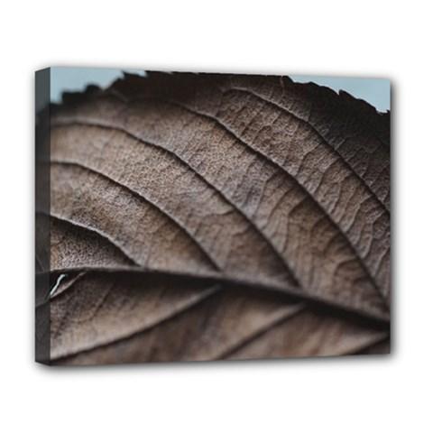 Leaf Veins Nerves Macro Closeup Deluxe Canvas 20  x 16