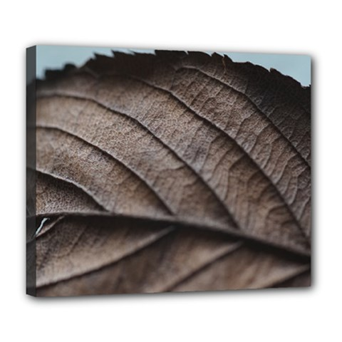 Leaf Veins Nerves Macro Closeup Deluxe Canvas 24  x 20