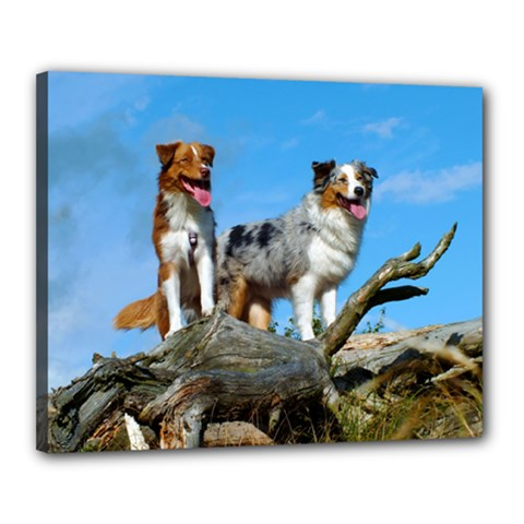 mini Australian Shepherd group Canvas 20  x 16