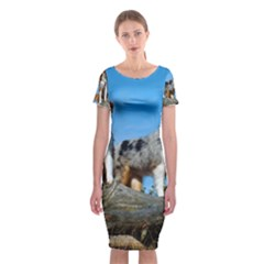 mini Australian Shepherd group Classic Short Sleeve Midi Dress