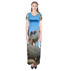 mini Australian Shepherd group Short Sleeve Maxi Dress