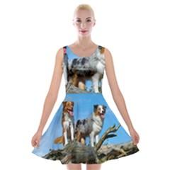 mini Australian Shepherd group Velvet Skater Dress