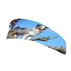 mini Australian Shepherd group Stretchable Headband