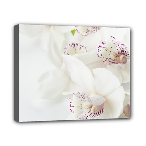 Orchids Flowers White Background Canvas 10  X 8