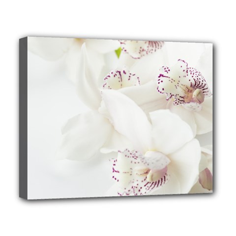 Orchids Flowers White Background Deluxe Canvas 20  X 16