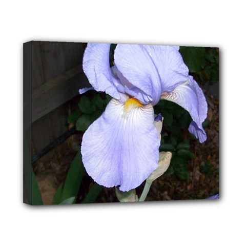 Bearded Iris Canvas 10  x 8
