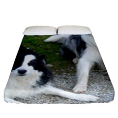 2 Border Collies Fitted Sheet (Queen Size)