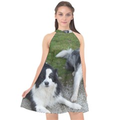 2 Border Collies Halter Neckline Chiffon Dress