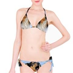 Black Tri Border Collie Wet Bikini Set