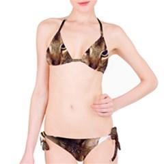 Abyssinian 2 Bikini Set