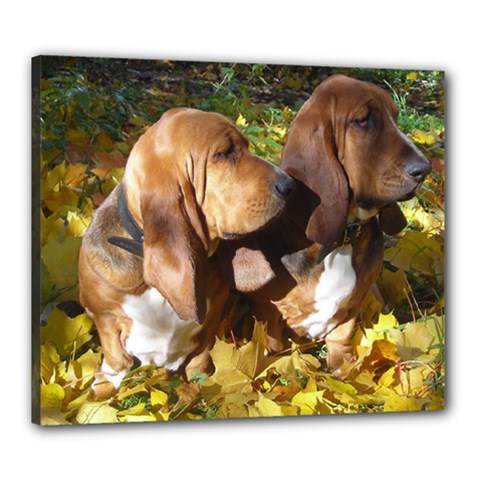 2 Bassets Canvas 24  x 20