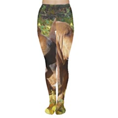 2 Bassets Women s Tights