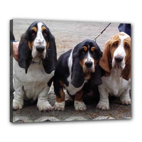 3 Basset Hound Puppies Canvas 20  x 16