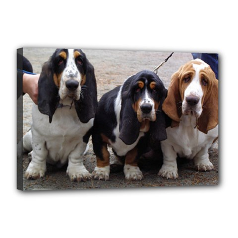 3 Basset Hound Puppies Canvas 18  x 12