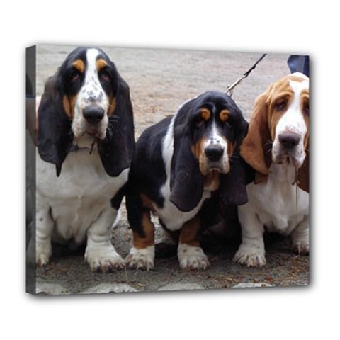 3 Basset Hound Puppies Deluxe Canvas 24  x 20
