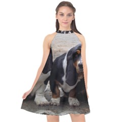 3 Basset Hound Puppies Halter Neckline Chiffon Dress