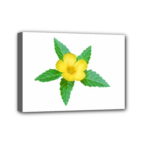 Yellow Flower With Leaves Photo Mini Canvas 7  X 5