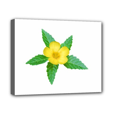 Yellow Flower With Leaves Photo Canvas 10  x 8