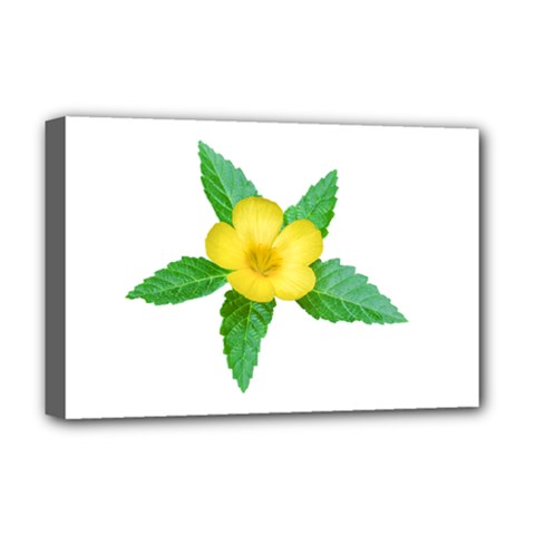 Yellow Flower With Leaves Photo Deluxe Canvas 18  X 12