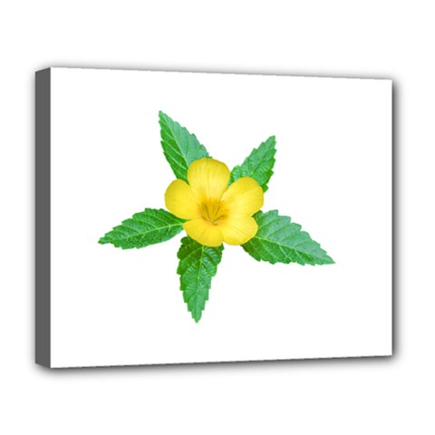 Yellow Flower With Leaves Photo Deluxe Canvas 20  X 16