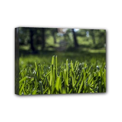 Green Grass Field Mini Canvas 7  X 5
