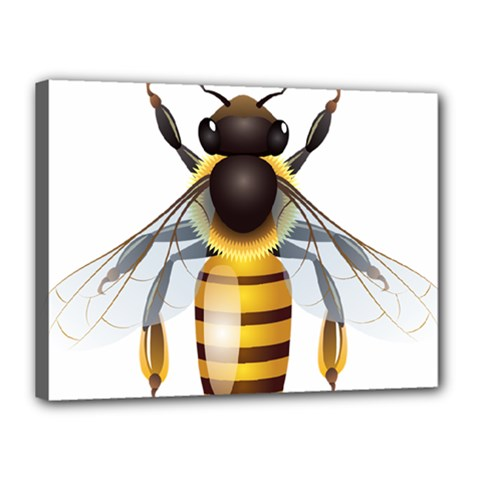 Bee Canvas 16  X 12