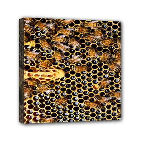 Queen Cup Honeycomb Honey Bee Mini Canvas 6  X 6