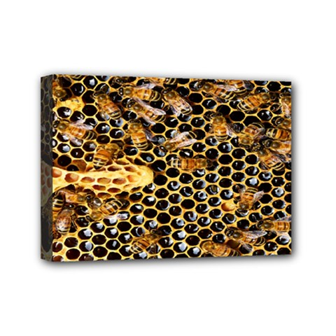 Queen Cup Honeycomb Honey Bee Mini Canvas 7  X 5