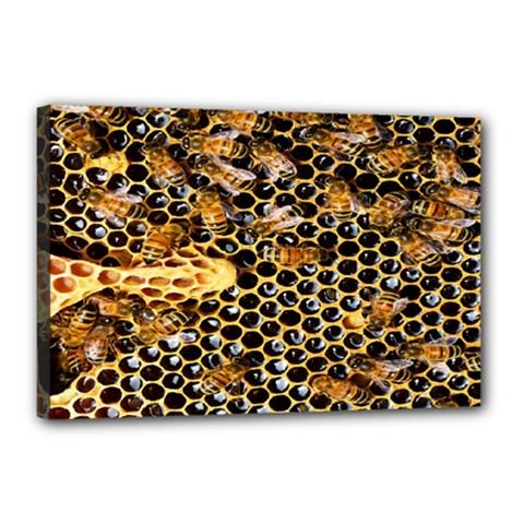 Queen Cup Honeycomb Honey Bee Canvas 18  X 12