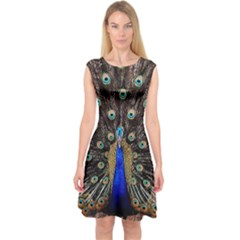 Peacock Capsleeve Midi Dress