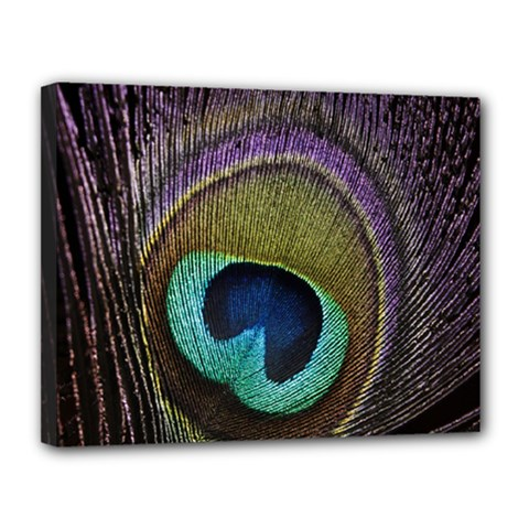 Peacock Feather Canvas 14  X 11