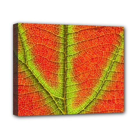 Nature Leaves Canvas 10  X 8