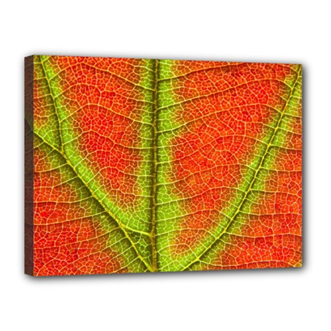 Nature Leaves Canvas 16  X 12